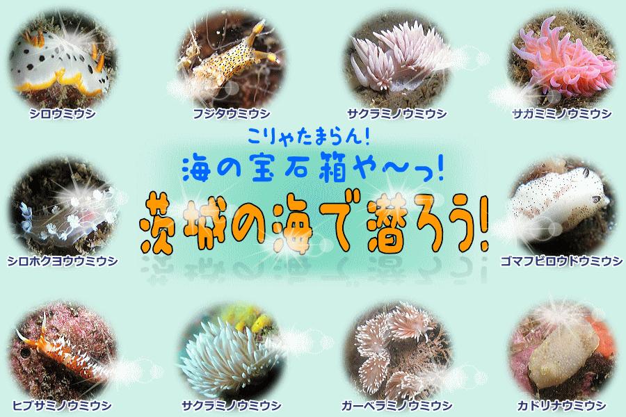 茨城の海で潜ろう!